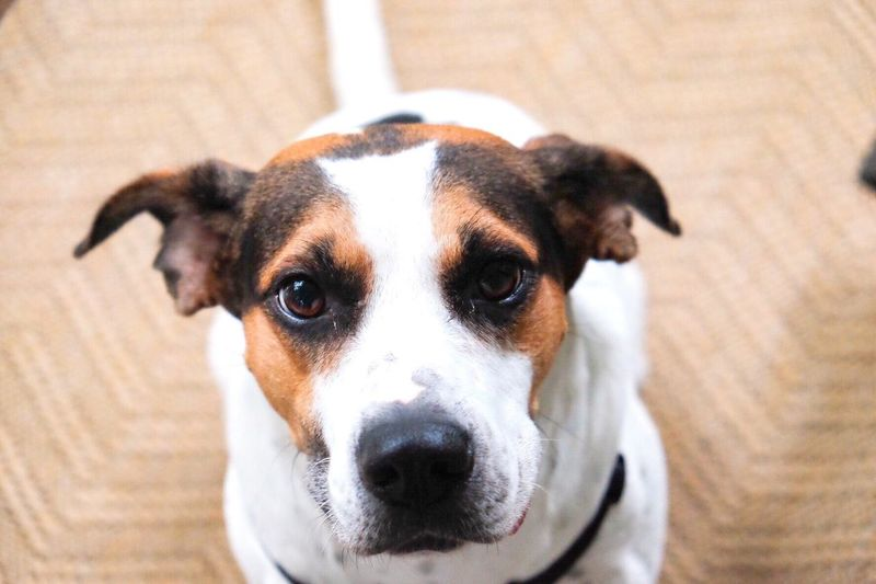 Dog Dogs Dog Love Dogs Of EyeEm Dog❤ Doggy portrait day 🐶❤️ Dogslife Rescuedog HoundDog FUJIFILM X-T1 Fujifilm Portrait Hound HOUNDS Hound Dog