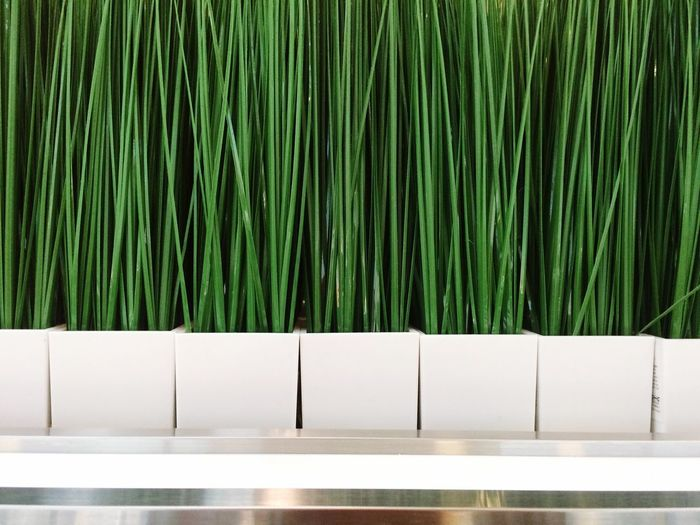 Green Color No People Plant Nature Day Growth Absence Pattern Tree Grass Wall - Building Feature Barrier