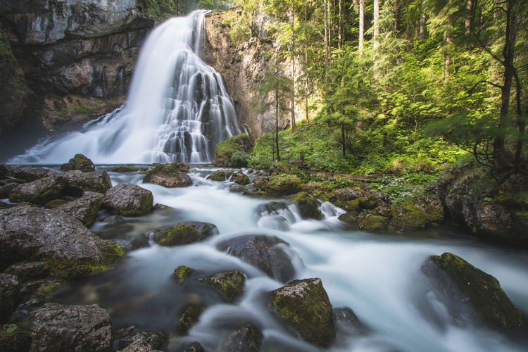 Gollinger waterfall in Austria Austria Gollinger Wasserfall Beauty In Nature Europe Flowing Water Forest Long Exposure Nature Power In Nature Rock Scenics - Nature Stream - Flowing Water Tree Water Waterfall