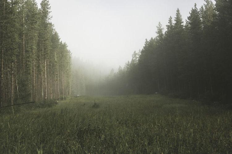 Trees growing on field in foggy weather