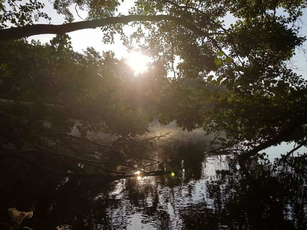 Beauty In Nature Nature Nature Photography Nature_collection Enten Morning Light Morning Morgenstimmung Seelandschaft Seascape Sealife Sea Naturephotography See Samsung Samsung Galaxy S8 Photography Tree Water Forest Sunlight Sun Branch Reflection Sky