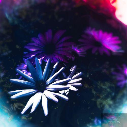 Flower Flower Head Purple Beauty Close-up