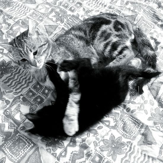 My two crazy Kitten Bestfriend Black Cat Haru Cats Petslife Playing With The Animals Lovelykitten Blackandwhite Photography Maya