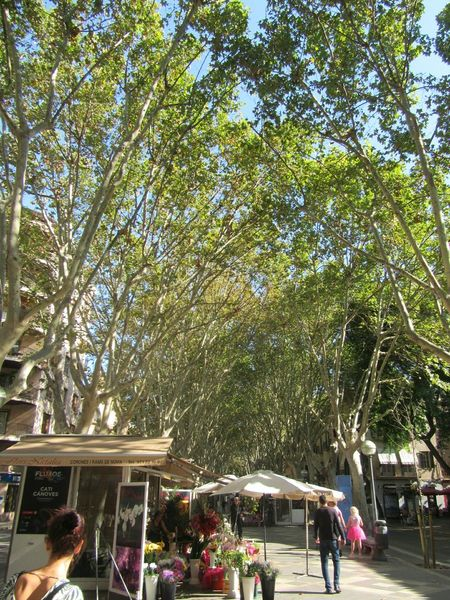 Tree Outdoors Lifestyles Nature Lastsummerdays Leaves🌿 SPAIN Beauty In Nature Green Color Growth Tree City Palma De Mallorca Markttag Market