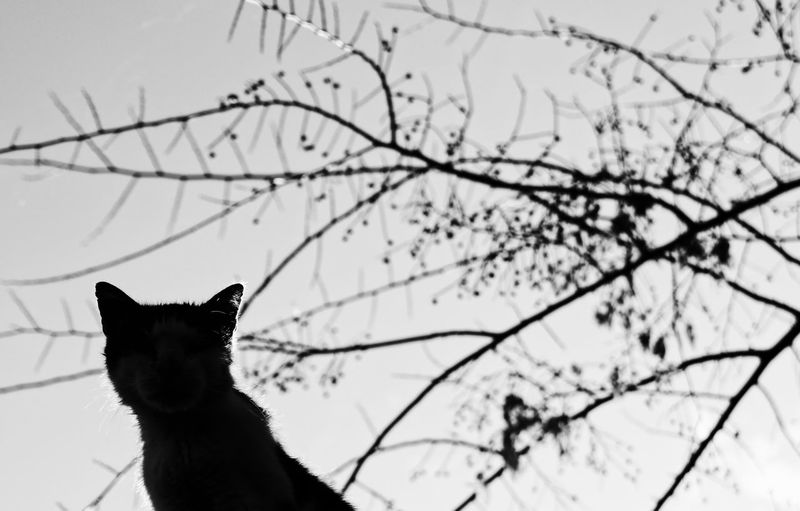 One Animal Animal Animal Themes Domestic Animals Cat Domestic Cat Animal Head  Bnw_collection Bnw_captures Bnwphotography Bw_collection Bw_lover Monochrome Monochrome_life Silhouettes Nature_collection Naturelovers