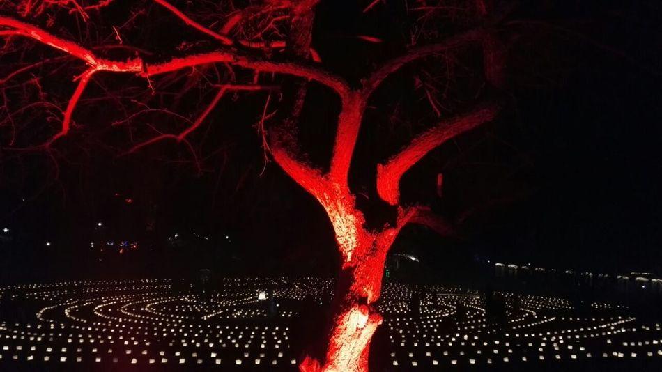 Tree Red Light Red Light Lights Nofilter Illuminated EyeEm Best Shots EyeEmBestPics EyeEm Best Shots - Nature Wood Old Tree Nightphotography Nightshot Night Photography Close-up Technology