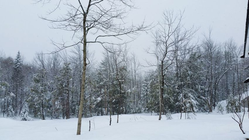 The Secret Spaces Quiet Places Solitude Freshness Beauty In Nature Private Property Snow Winter Cold Temperature Frozen Nature Outdoors No People Tree Day Sky Beauty In Nature Mine Only Open Air Safehaven Clean Water Smells Good