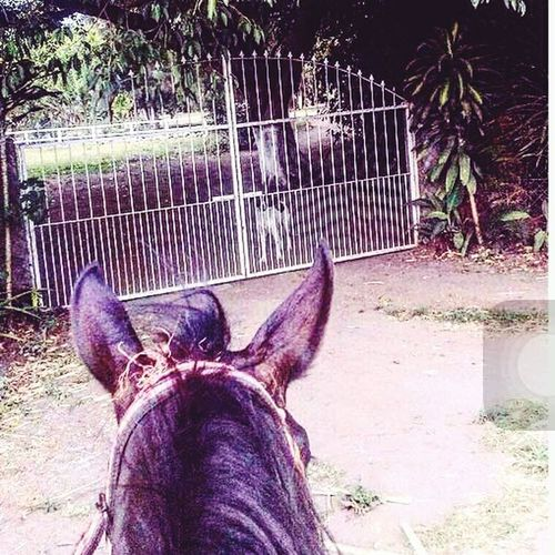 Horses 🐴