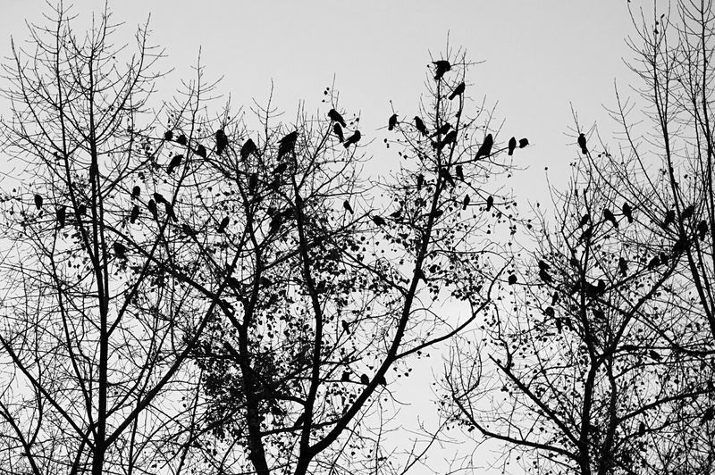 Bnw_friday_eyeemchallenge Dear_toMe Freedom Birds Of EyeEm  So Far Away From Me 😆 Smart Simplicity Looking Into The Future Minimalism Enjoying The View From My Point Of View Stand Out From The Crowd Relaxing Time EyeEm Best Shots EyeEm Nature Lover Perspective Looking Up Hanging Birds_n_branches Ladyphotographerofthemonth My Best Photo 2015 EyeEm Gallery Learn & Shoot: Simplicity Showcase: November