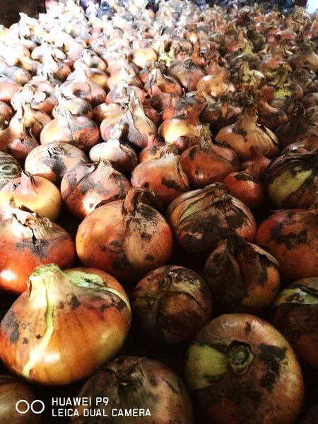 Vegetable Healthy Eating Food Food And Drink Freshness Abundance Organic Full Frame Raw Food Large Group Of Objects Backgrounds Market No People Day Onions Biofood