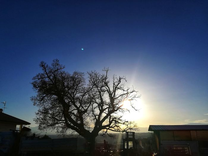 Light Flares Spoltore, Abruzzo Sunset Secular Tree Suggestive Agriculture Evening Country Tree Sky Built Structure Moon Outdoors No People Clear Sky Nature Astronomy