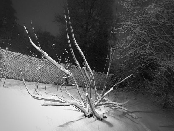The Kraken Winter Snow Beauty In Nature Nature Photography Trees Covered With Snow No People Night Photography Black&white