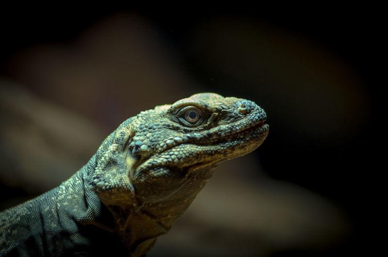 Smart Simplicity Reptiles Animals