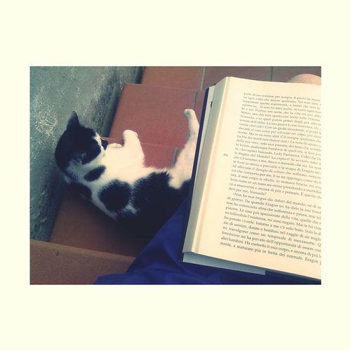 Simple Moment Catandbook Cat♡ Brisingr #ilciclodell'eredità