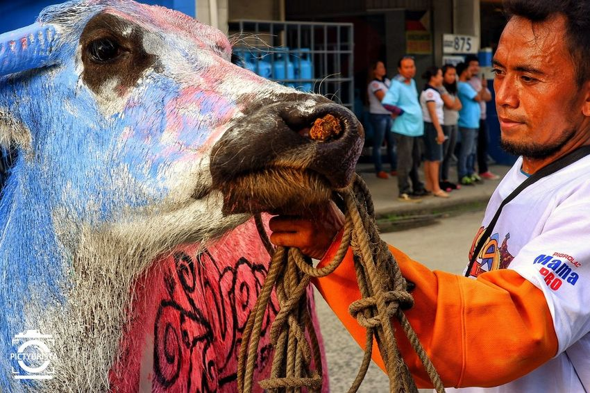 """Akoang Kabaw"" Picture taken during the celebration of Tagum City's 6th Ugmad Festival, featuring Carabao Painting contest : A way in which Tagumeños honor the farmers and a way of giving importance to the different agricultural products of the city. Fujifilm XT100 