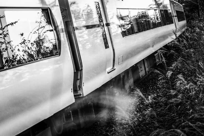 Autumn. Monochrome Limited Express Higland Autumn Leaves Travel Photography Mode Of Transportation Transportation Land Vehicle Day No People Reflection Nature Public Transportation Window Travel Transparent Plant