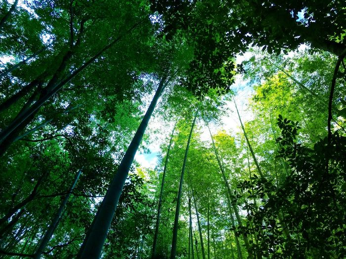 Low angle view of bamboo forest