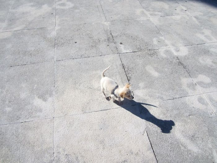 High angle view of dog on walkway during sunny day