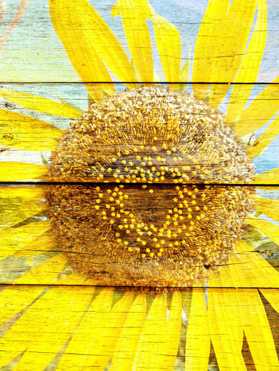 Close-up Day Flower Fragility Freshness Honeycomb Nature No People Outdoors Yellow