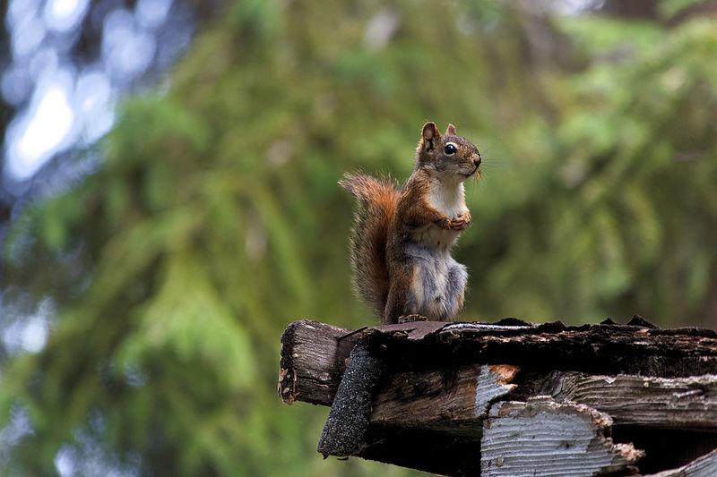 Squirrel sitting on wood
