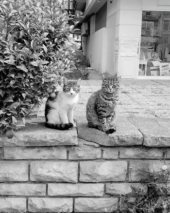 Up Close Street Photography Cat Cats Blackandwhite B&w Animals Nature Nothuman Couple Kitty Street Pet Portraits