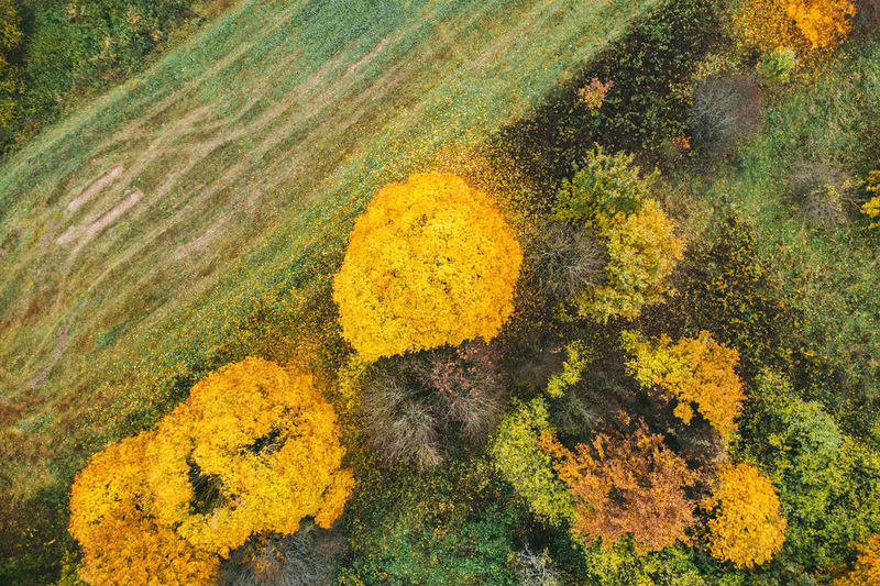 Aerial view of trees growing by land