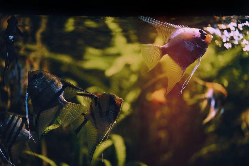 Fish Aquarium Fish Tank Colors Colours Colorful Colourful Leaf Close-up Animal Themes Animals In Captivity