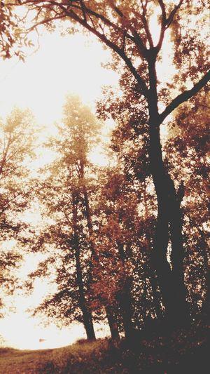 Summer Fades Away and Autumn Arrives Olympia, Wa Northwestisbest ProCam2