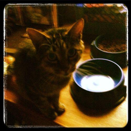 My kitty cat Sissy ^.^ #cat #sissy #mybaby Cat