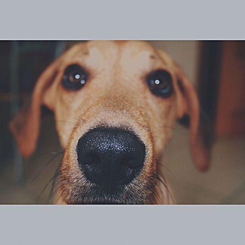 Puppy Miamor Love Mybeautifuldog Dog Lover Photooftheday 💙🐶
