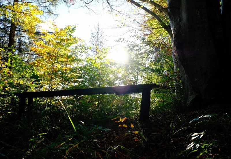 Autumn Beauty In Nature Bench Forest Leaf Leaves Nature Outdoors Plant Part Seat Sunlight Tree Tree Trunk