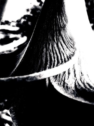Radical Blackandwhite Photography Otherness Abstract Photography Uber Somber EyeEm Gallery