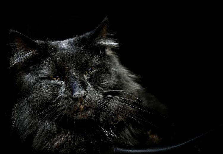General. Cat