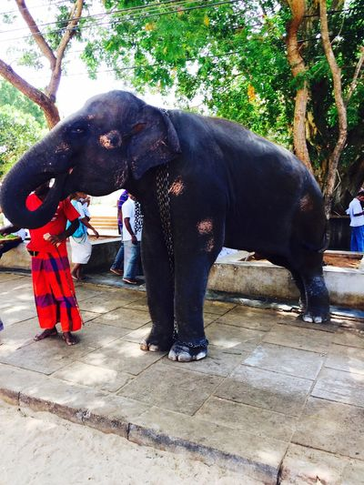 Elephant SriLanka Srilankatravel Kataragama