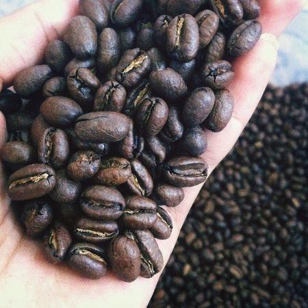 Coffee Bean Peaberry Popular Photos Taking Photos Coffee Shop