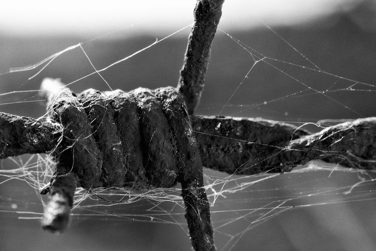 Barbed wire Macro Bnw_friday_eyeemchallenge Bnw_single_object Barbed Wire Close-up Web Spider Web Razor Wire Survival