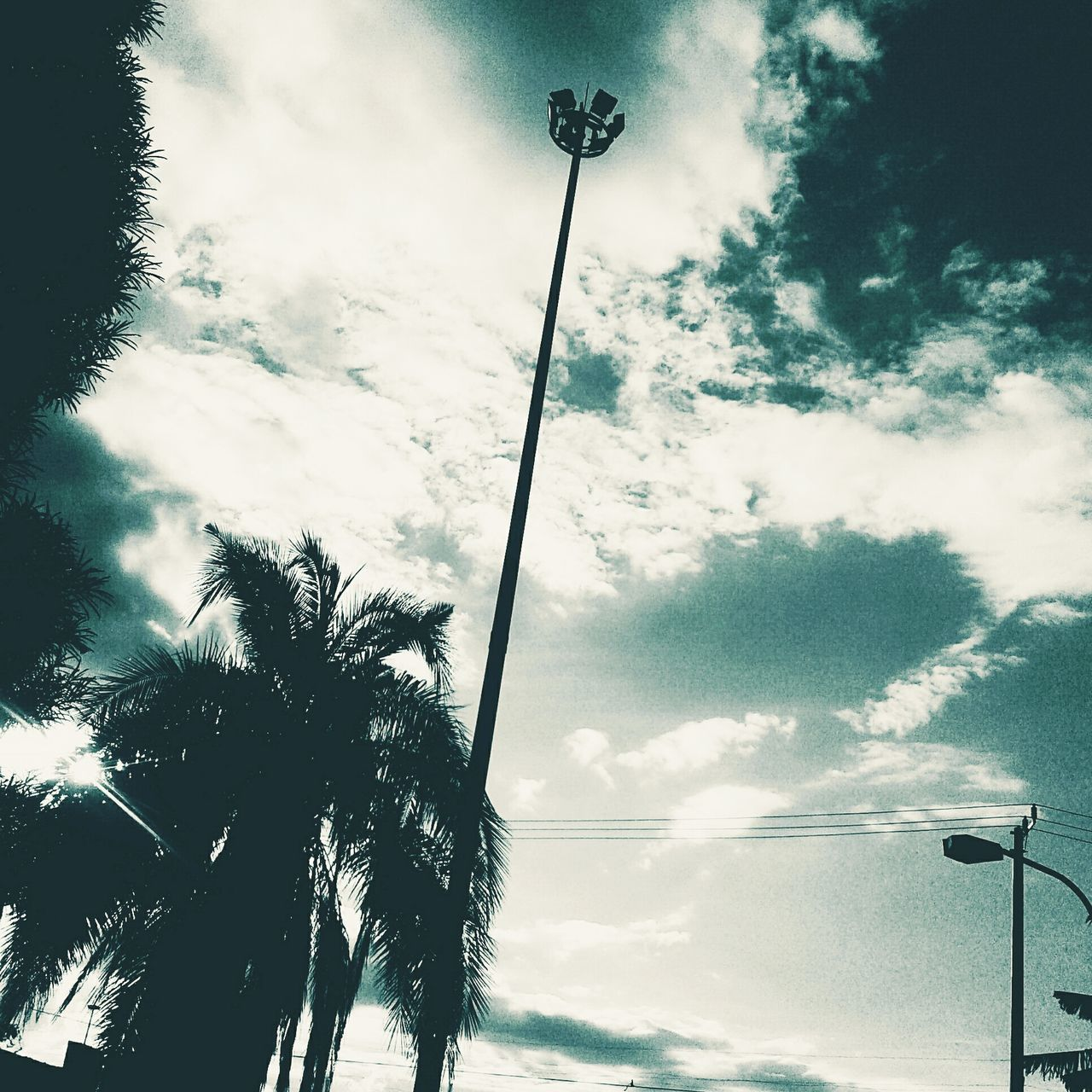 low angle view, street light, tree, sky, cloud - sky, palm tree, silhouette, cable, no people, outdoors, day, technology, nature, beauty in nature