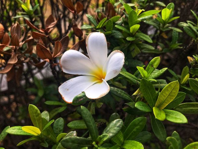 One Flower Flower Plant Flower Flowering Plant Growth Beauty In Nature Freshness Petal Flower Head Green Color Plant Part White Color Nature