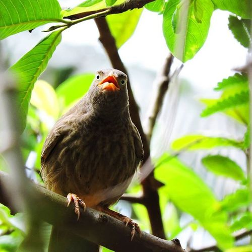 Bird watching . Picoftheday MyClick PhotographyLove Photography Nikon Instagram Instamood Instalove Instadaily Picoftheday