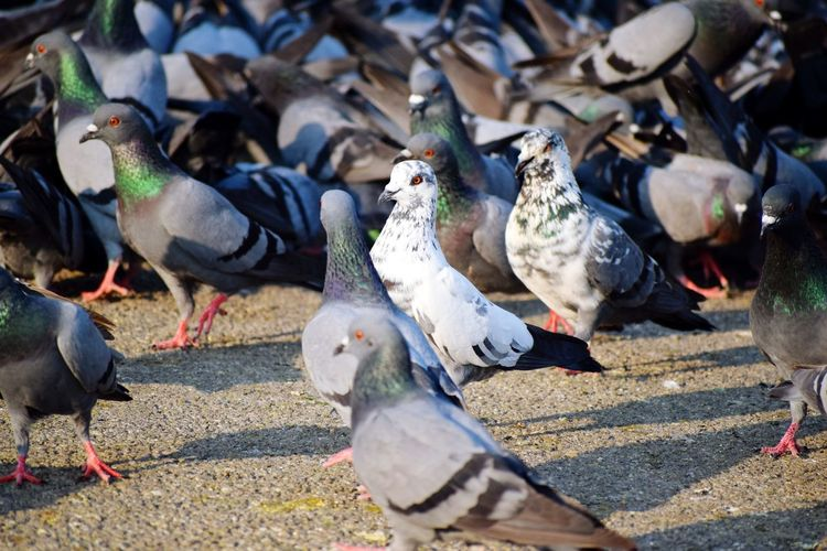 Bird Photography Animal Themes Animal Photography Animals In The Wild Bird Spread Wings Feather  Sun Pigeon Perching Dove - Bird Mourning Dove Preening Flapping Flock Of Birds Beak EyeEmNewHere