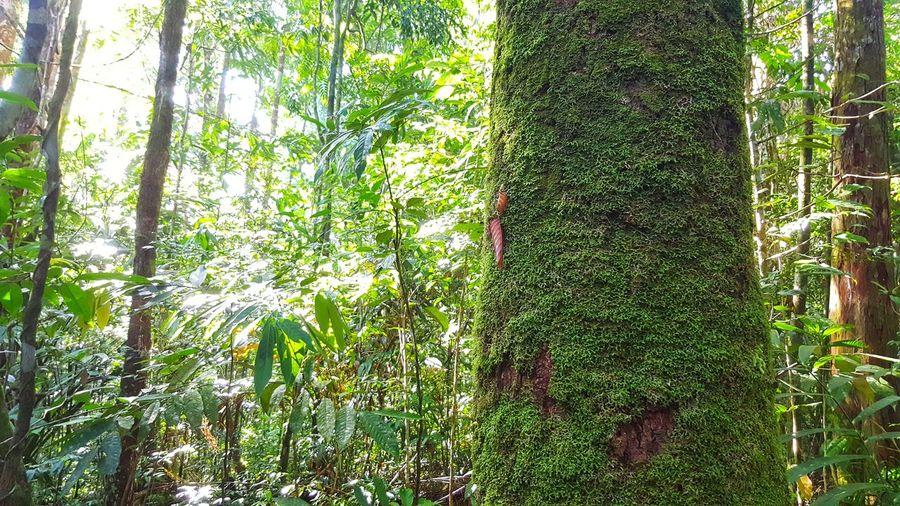 Moss growing on