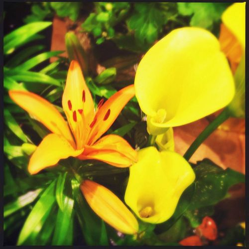 Summer, please don't go yet! Flowers Yellow Orange