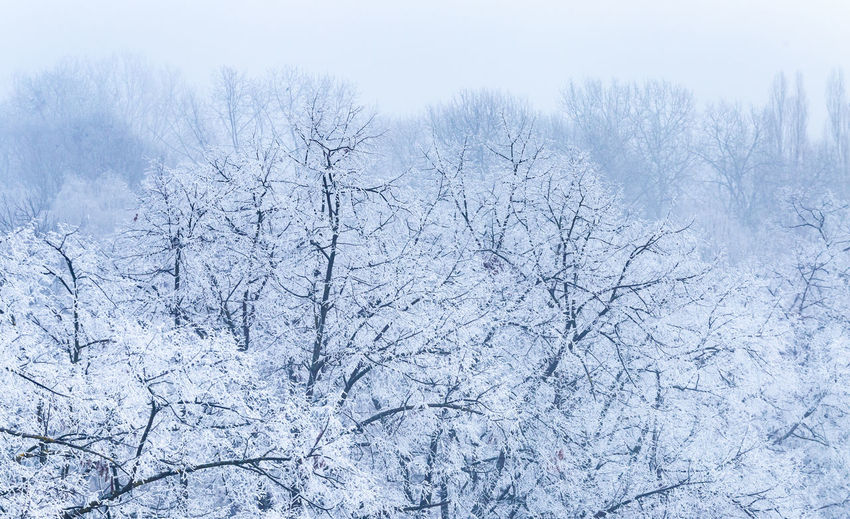 Snow covered bare trees on land during winter