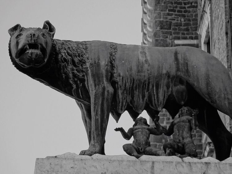 Statue Sculpture No People Built Structure Architecture Animal Themes Low Angle View Day Outdoors Building Exterior Mammal Sky History Travel Destinations Tourism Rom Rome Roma Romulus And Remus Shewolf Archaeology Travel Ancient