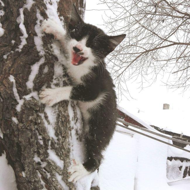 One Animal Domestic Cat Close-up Cold Temperature Winter Cat In Tree Tree Trunk Romania @WOLFZUACHiV Edited By @wolfzuachis Kitten On Market Veronicaionita Eyeem Market Cat Showcase: January Wolfzuachiv Huaweiphotography Showcase: 2017 Cats Of EyeEm Snow Snowing Branch EyeEmNewHere Resist