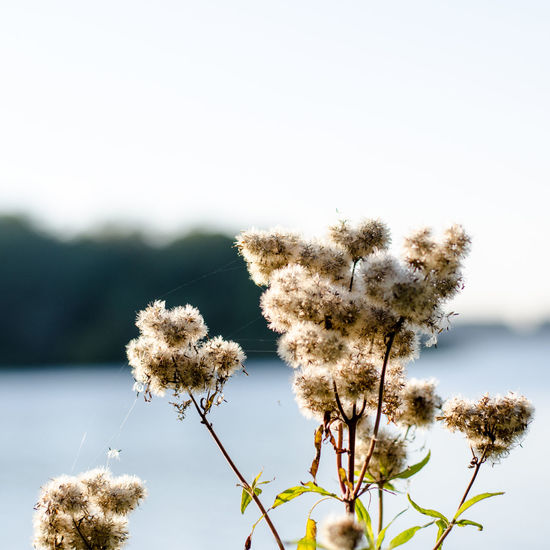 Beauty In Nature Close-up Day Growth Nature Needle - Plant Part No People Outdoors Plant Sky