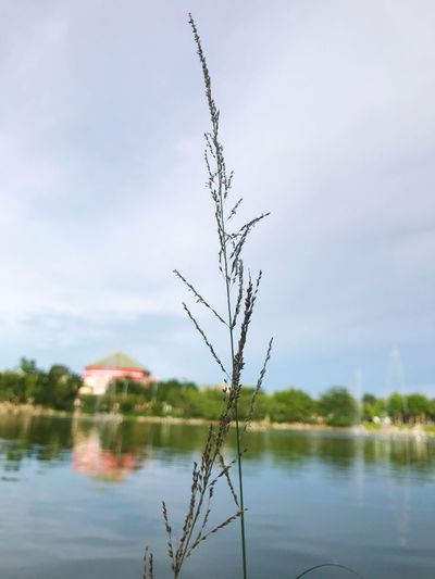Plant by lake against sky