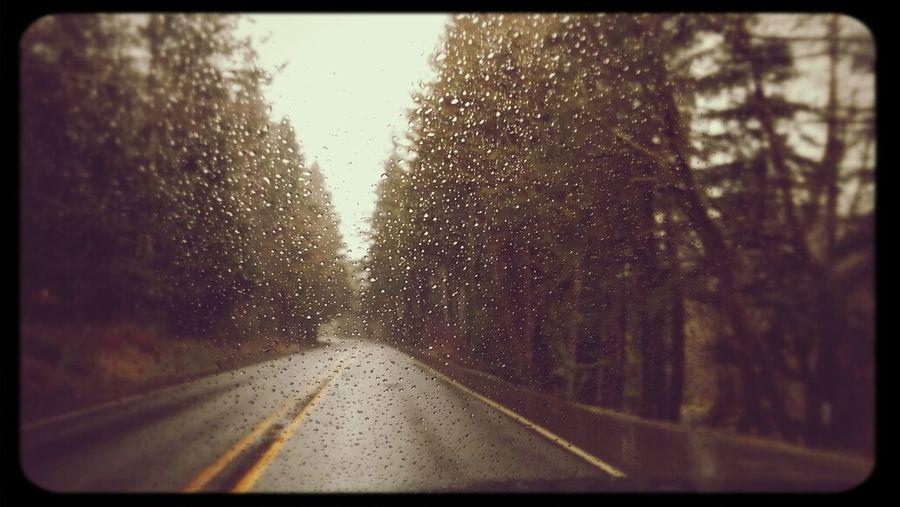 Highway101 Rainy Day Oregon Coast Trees_collection