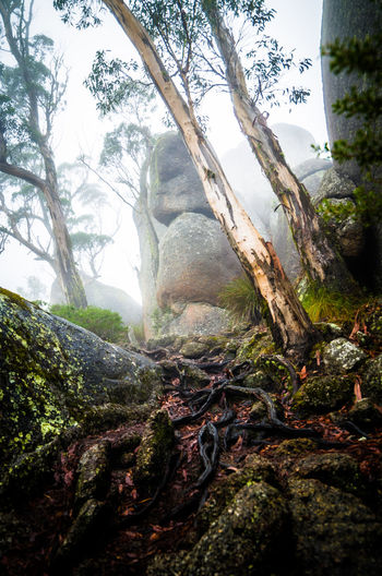 Beauty In Nature Contrast Day Foggy Morning Landscape Mountain Nature No People Outdoors Roots Scenics Tranquil Tree Tree Trunk