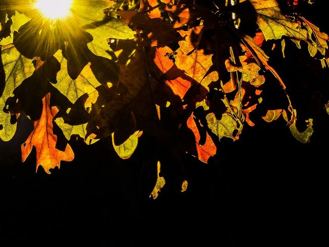 Learn & Shoot: Simplicity Fall Colors Dramatic Lighting